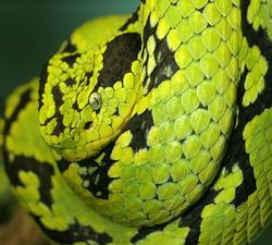 Kvinnen og slangen