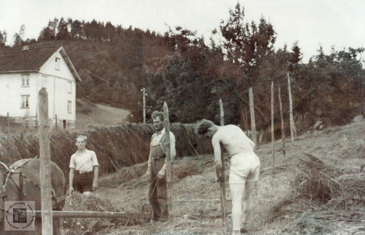 """Haustonn """"Der heime"""" på Refsnes i Grindheim senere Audnedal."""