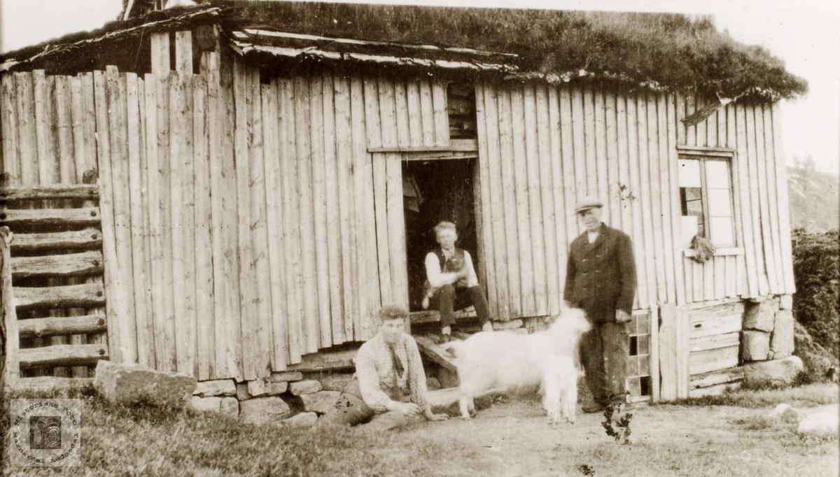 Tobias Stensland med geita og killingen på Løland i Grindheim.