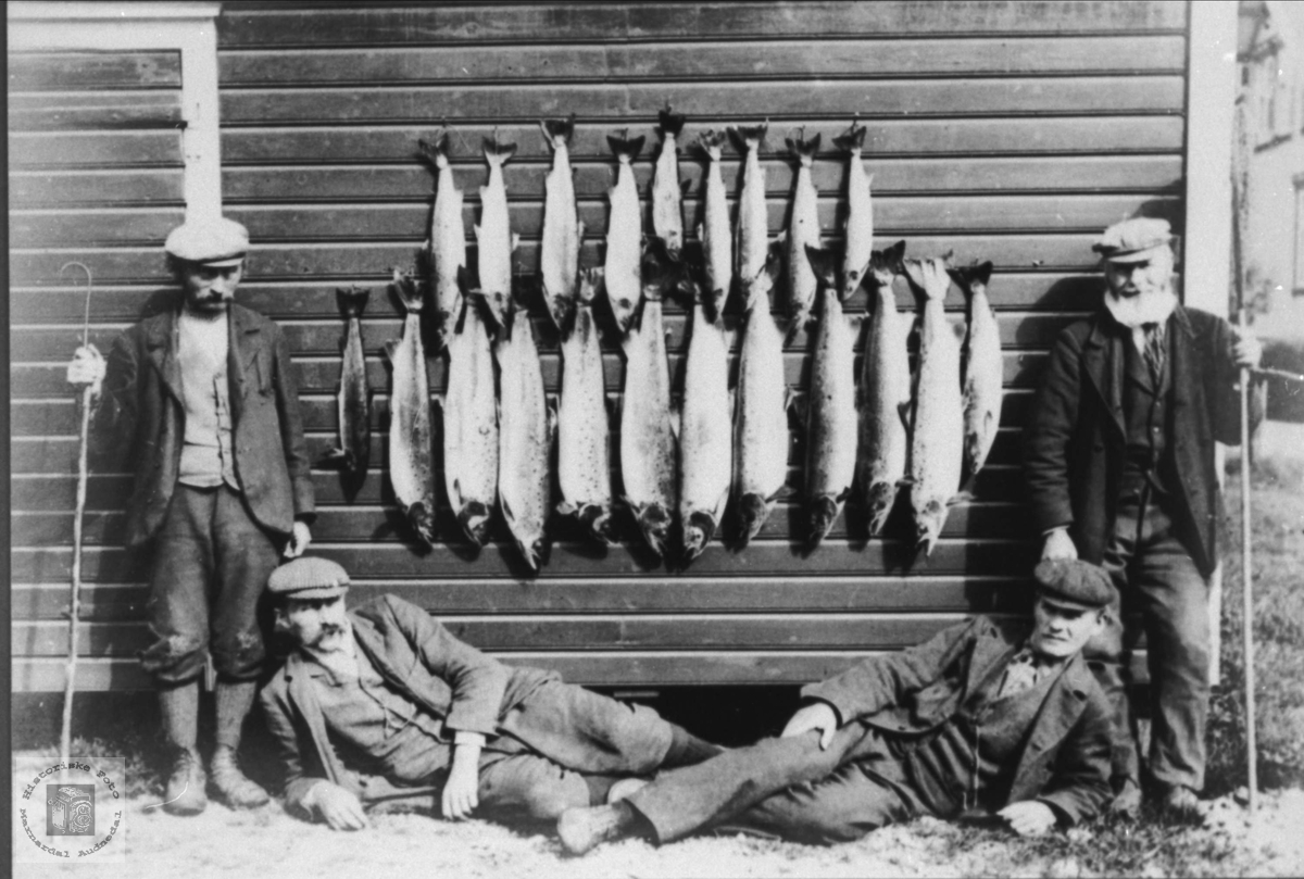 Laksefiskeresultat