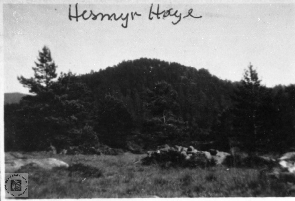 Hessmyr, Høye