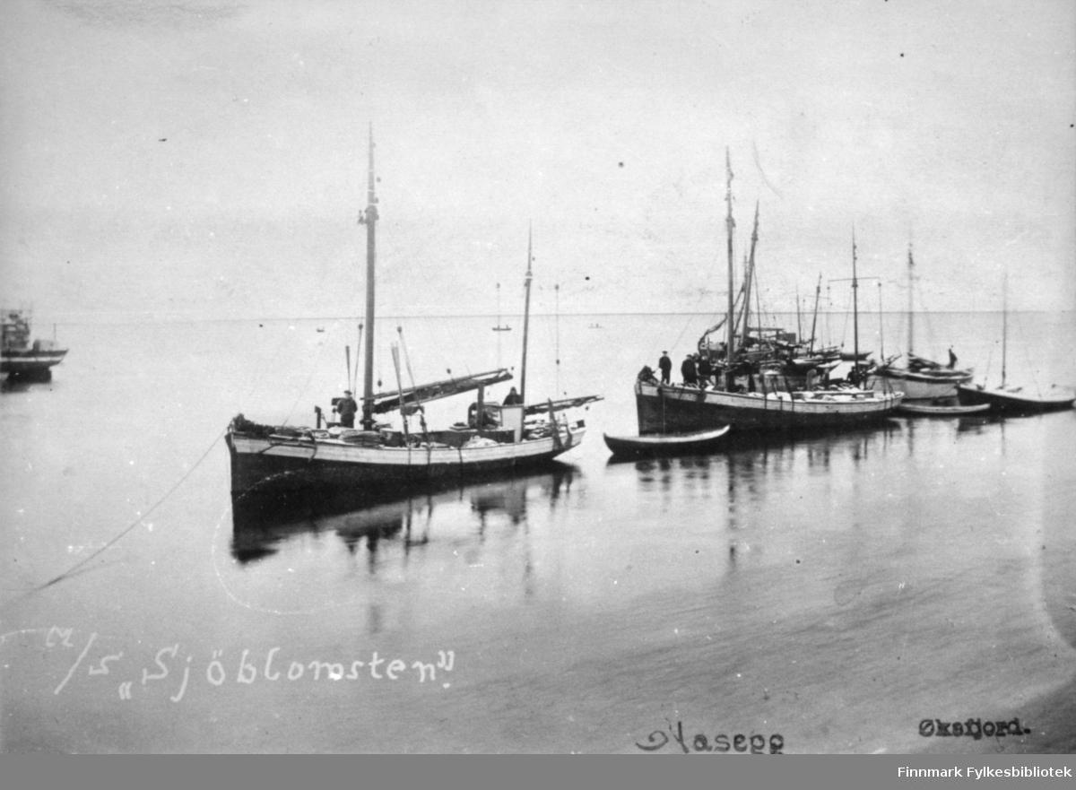 Fotografi av båter fortøyd i Øksfjord. Den nærmeste båten er M/S Sjøblomst. Den var Cort Bucks motorbåt som han kjøpte i 1912 sammen med Johan og Amund Nilsen. Båten er av tre, har en bred hvitmalt rekke og to master med sammenfoldet mesan. En liten trebåt henger i tau fra hekken på Sjøblomsten og to personer ses på dekket. Bak den ligger en nesten lik båt fortøyd med to-tre personer på dekk. Flere mindre båter ligger forøyd bak dem igjen. Sjøen ligger blikkstille og et stykke utpå fjorden kan flere mindre robåter skimtes.