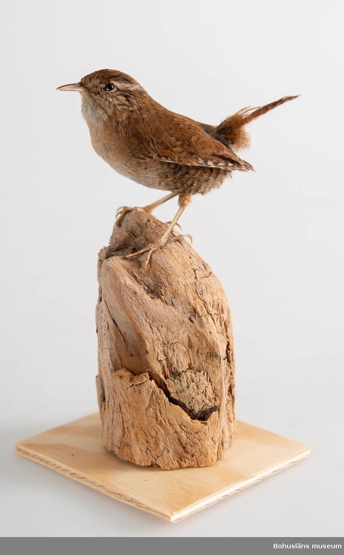 Monterad sittandes på rotträ med tunn träplatta i botten för stabilitet.