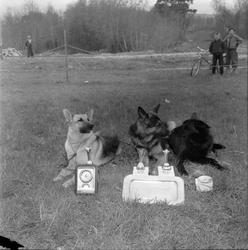 Schäferhundutstilling på Leangenbanen