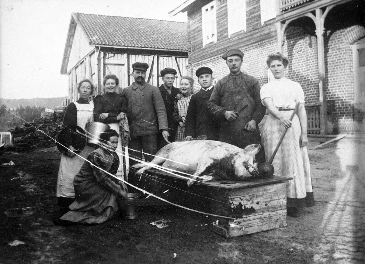 Slakt på Frogner i Sørum En blodtappet gris ligger på slaktebenken. Alle gårdens folk er stilt opp for grisen som ligger på lid de parade. I bakgrunnen et hus med murt første etasje.