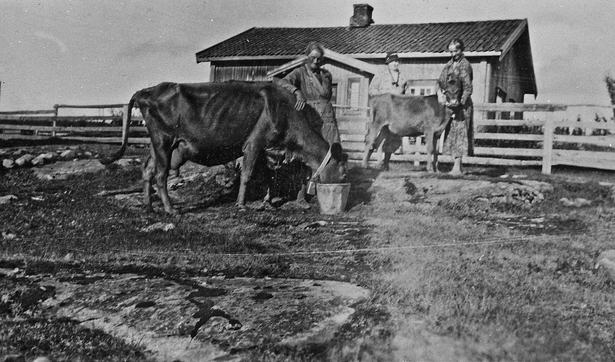 På et gådsbruk. Richardsbråten, Gullverket. 1915-16. Aasta og Esther Røen. Moren Johanne Røen bak.