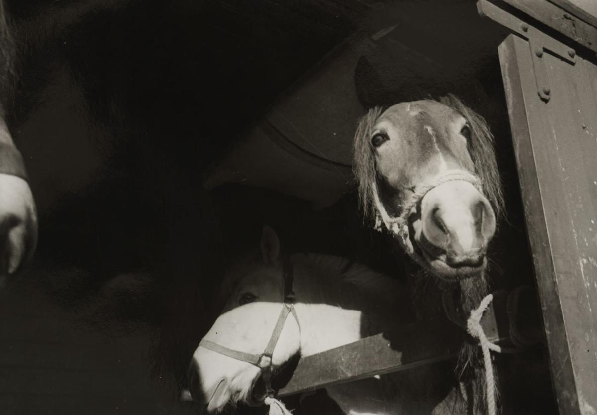 Hestetransport i lukket godsvogn.