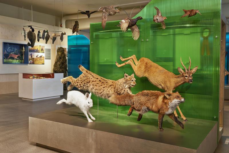Interiør i utstillingen Tråkk i mangfoldig natur. 2015