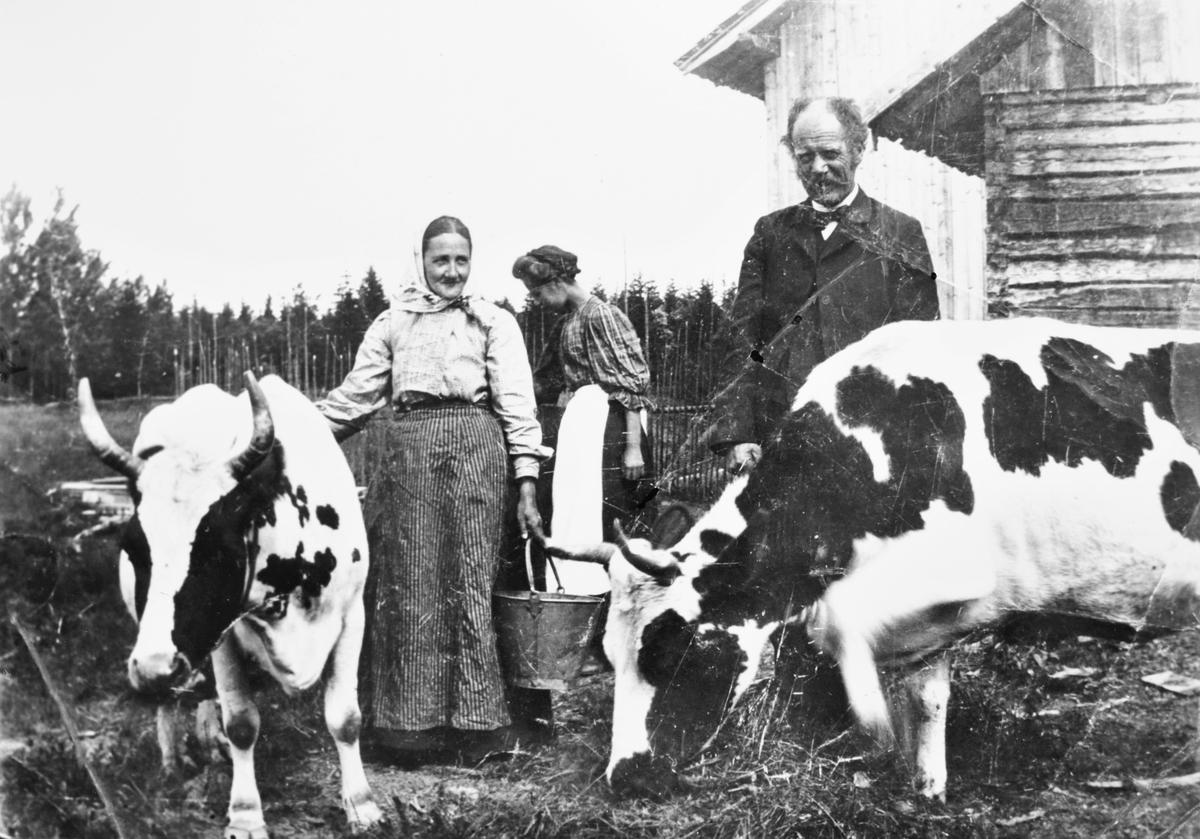 Hellerud i Blaker ca. 1911, Andreas Hellerud i findresss med sin kone og noen kyr, i bakgrunnen ei dame.