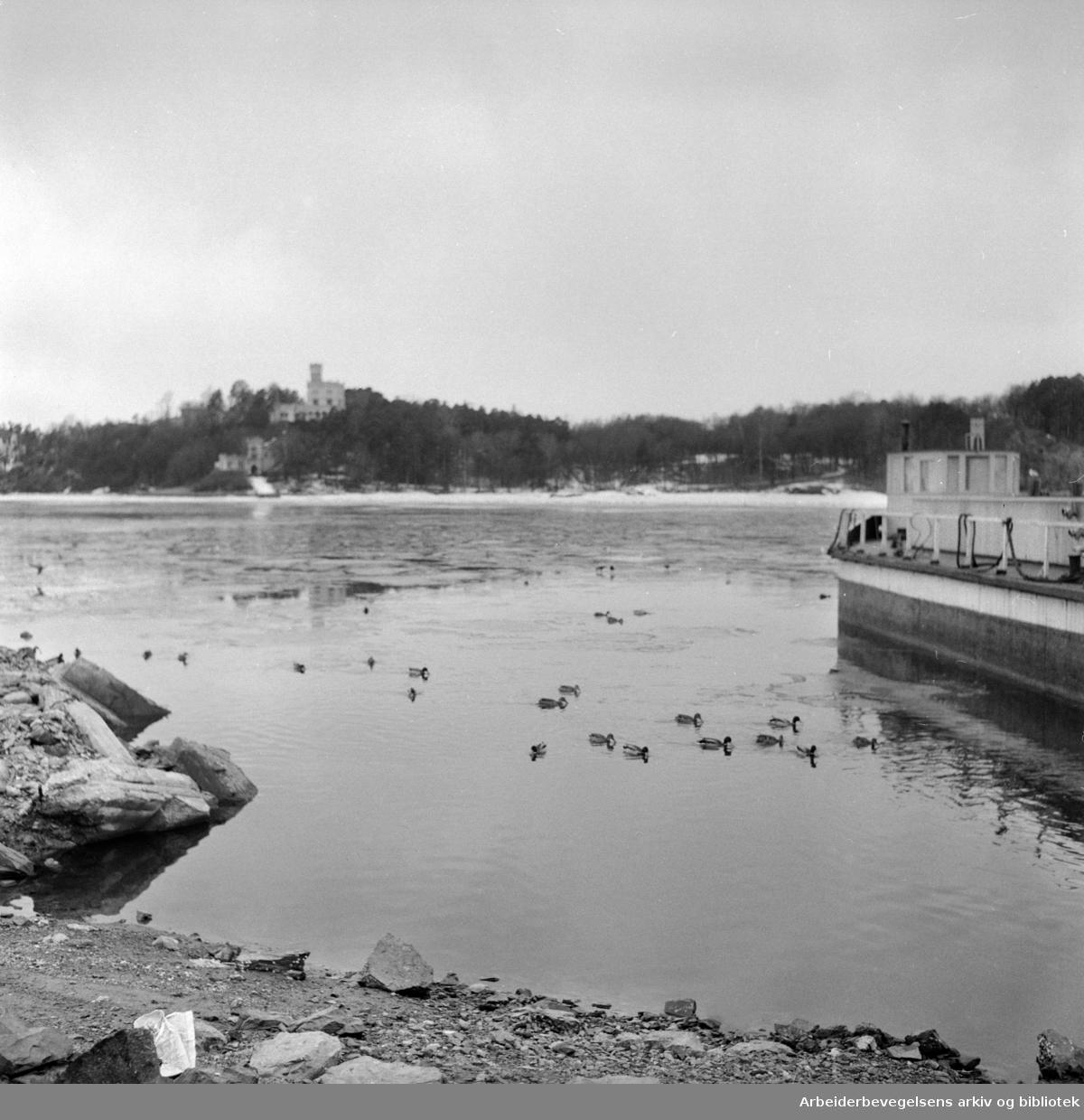 Havna. Stemningsbilder. Mars 1955