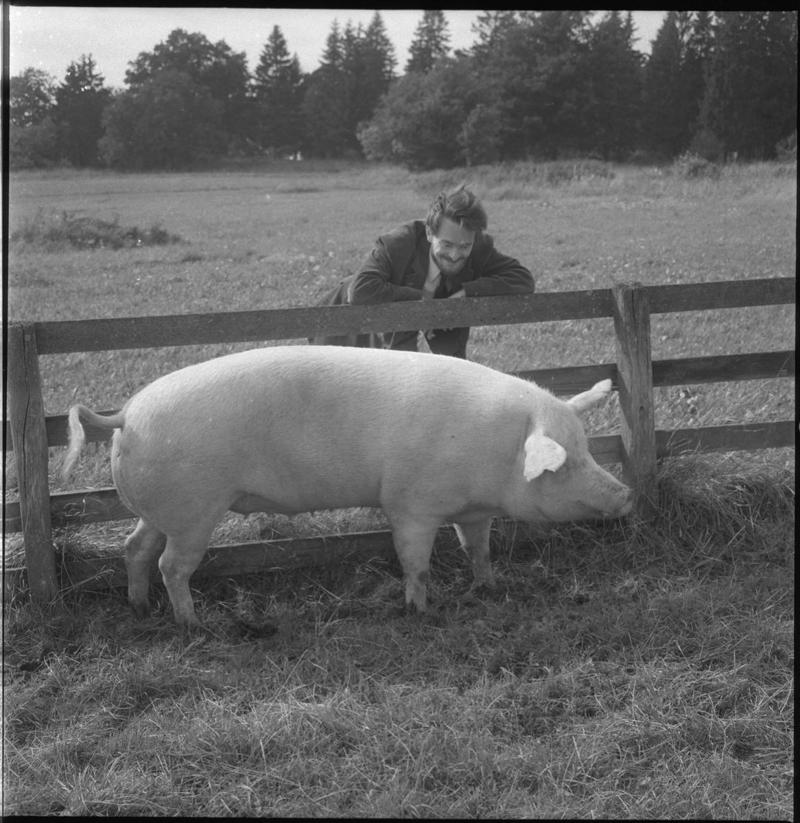 Svingården på Djurgården. Allmänreportern Lars Grönlund på tidningen Östgöten, fotograferad i samband med ett uppdrag på Djurgården. Grönlund står lutad över en inhängnad, inom vilken det står ett svin.Linköpings Djurgård var kunglig jaktmark under hundra år från 1606. Därefter utgjorde den lösningsjord för länets landshövdingar fram till dess att den övergick till militär mark. Garnisonen höll från tidigt tjugotal och in på 1970-talet en egen svingård i den nordvästligaste delen av Djurgården strax invid nuvarande Garnisonsrondellen.