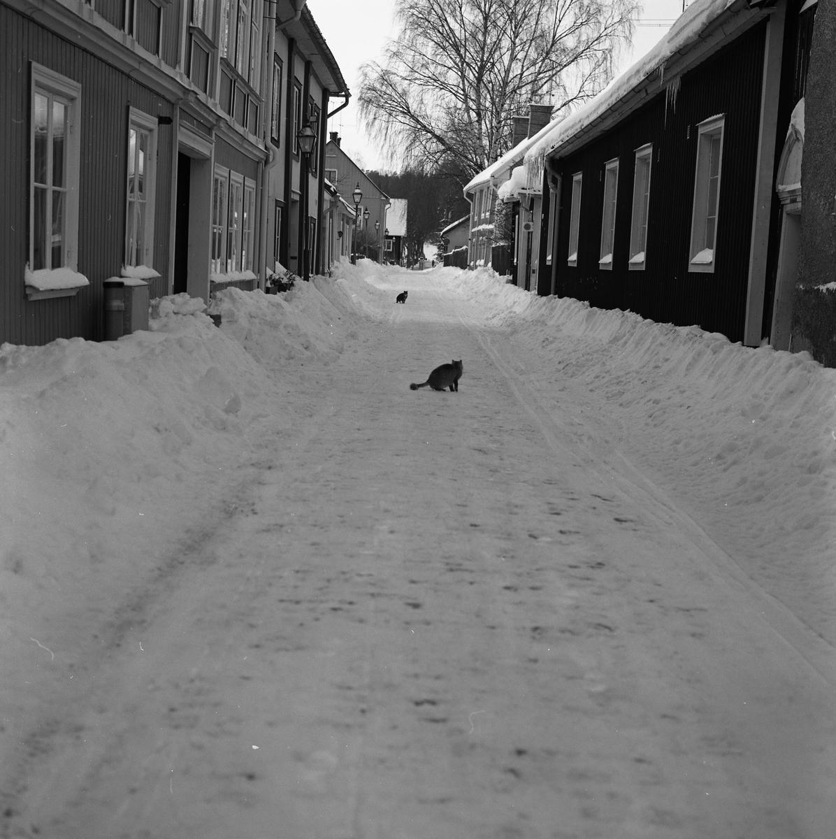 Västerlånggatan i mellandagarna. Två katter är ute i snön.