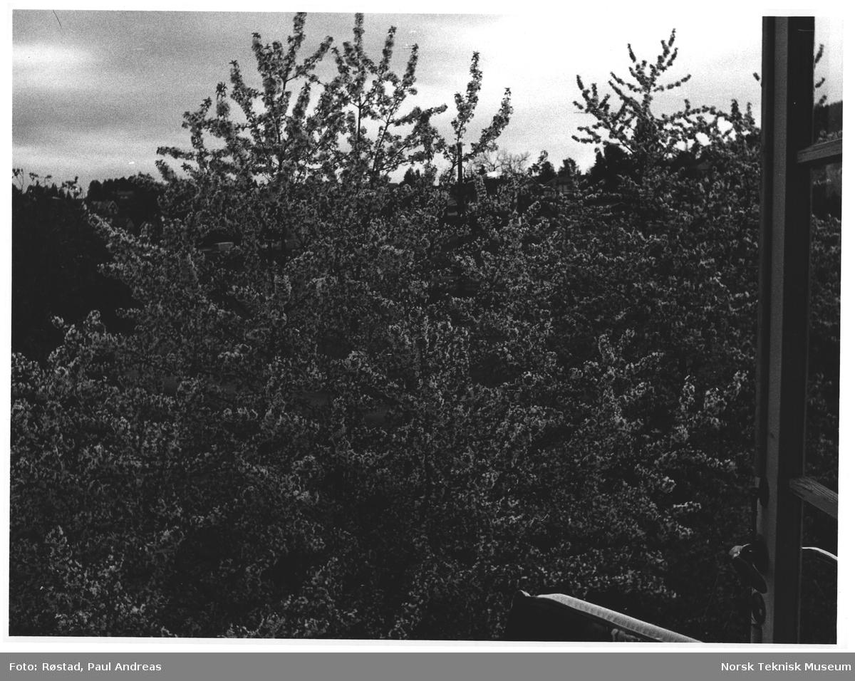 Kjelsåsv. 28 B. I full blomst i skumringen