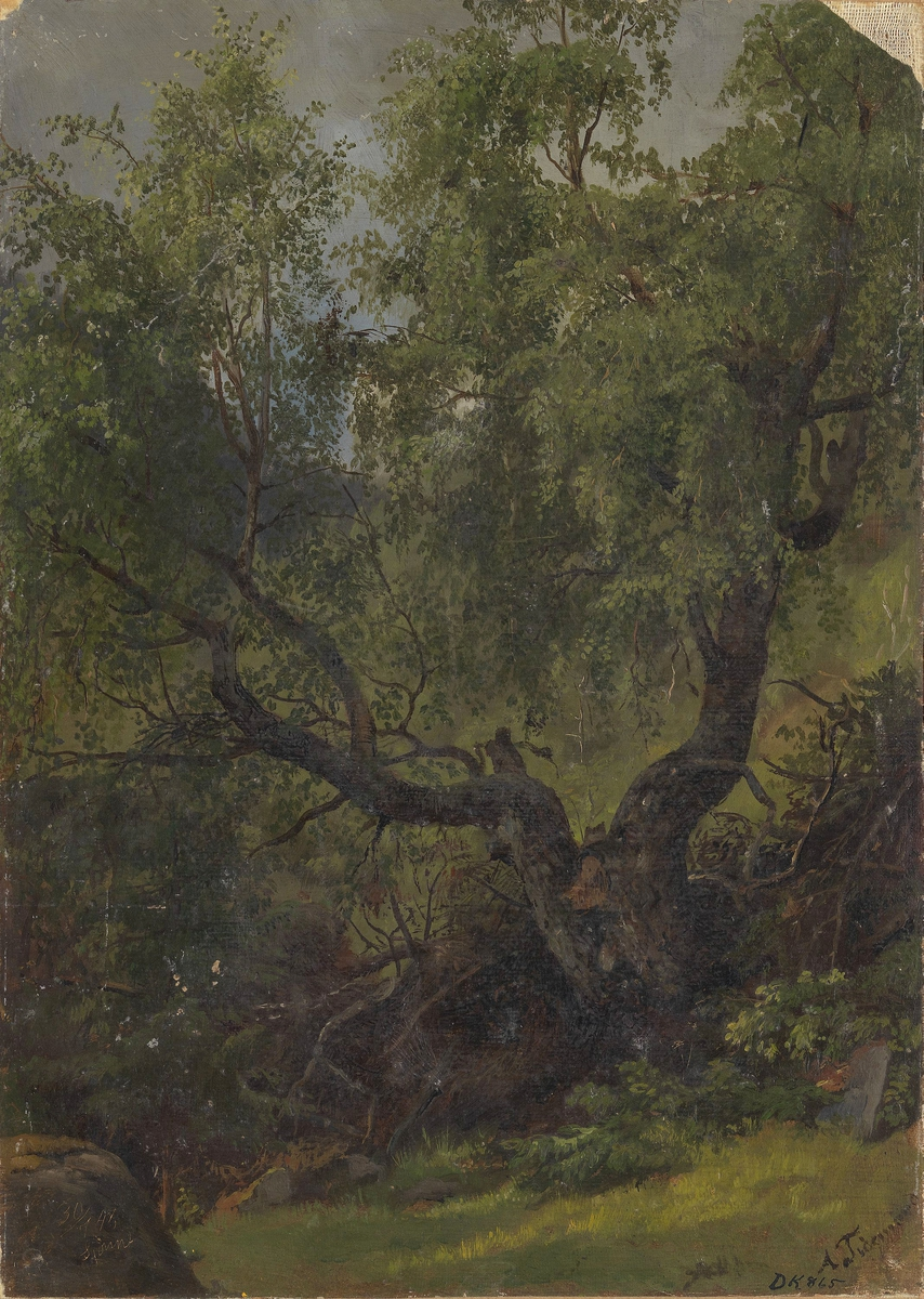 Skogstudie fra Numedal [Maleri]