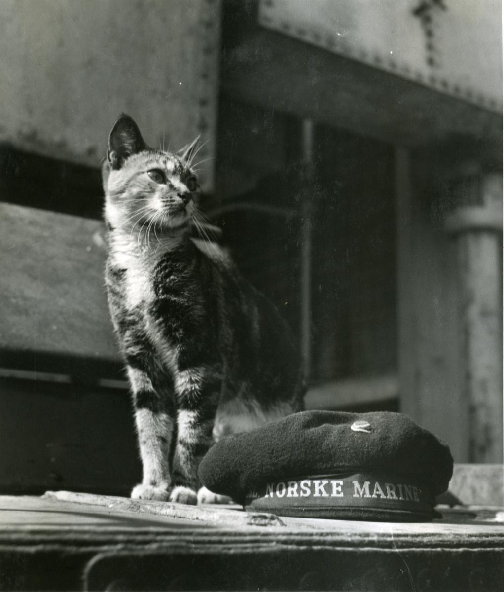 "Album Glaisdale H.Nor.M.S. ""Glaisdale"". Fotograf: Keystone press. Skipskatten."