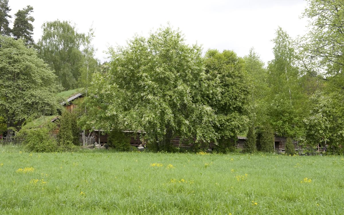 Norsk Folkemuseum, mai 2010. Vår i friluftsmuseet. Trær og grønn eng.