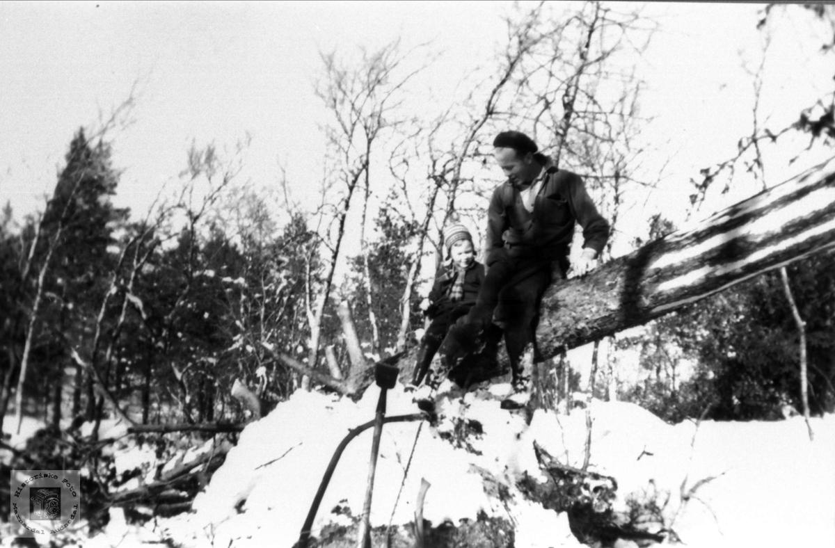 Tømmerhogst på Arsknutten på Hjemlestad, Bjelland.