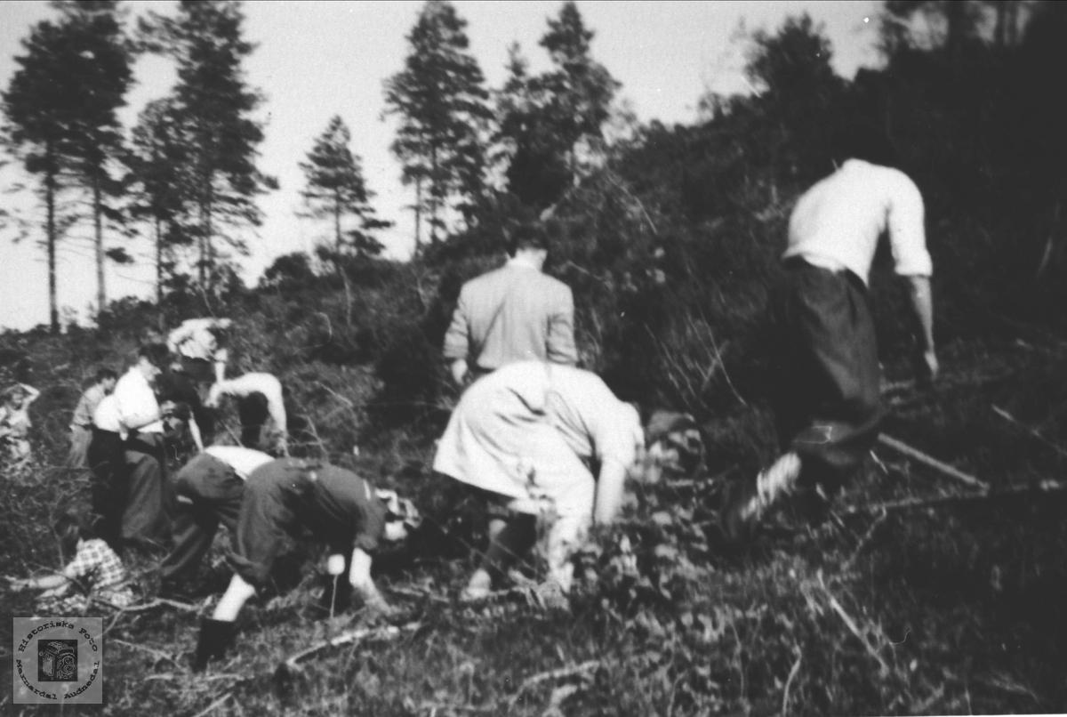 Skogplanting på Fladelid av avholdslaget. Øyslebø.