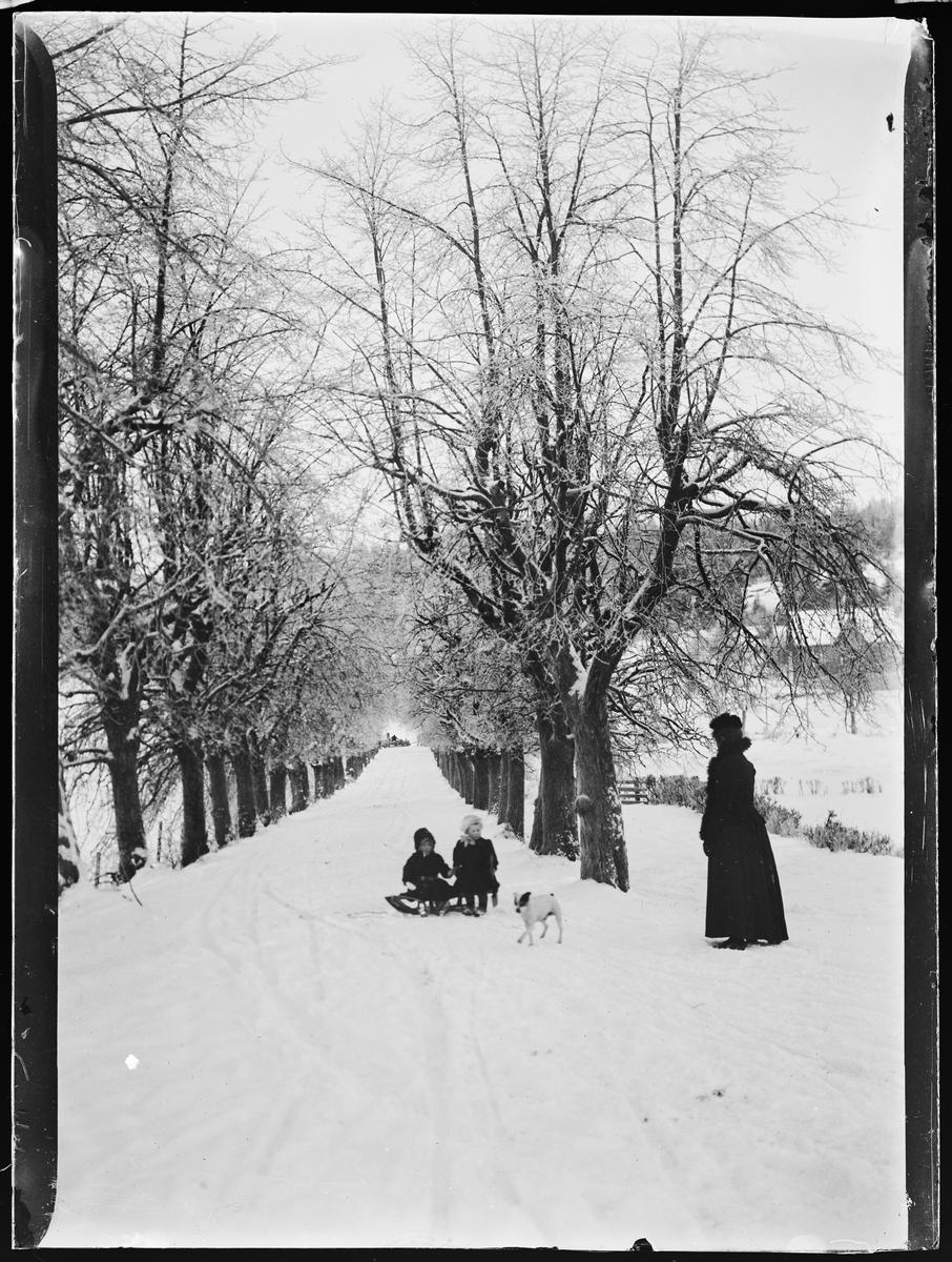"""""""Aleen til Veien 4"""" (inskr eske). Alléen fra Linderud gård opp mot Tronheimsveien. To barn sitter på en kjelke, en hund og en dame står ved siden av."""