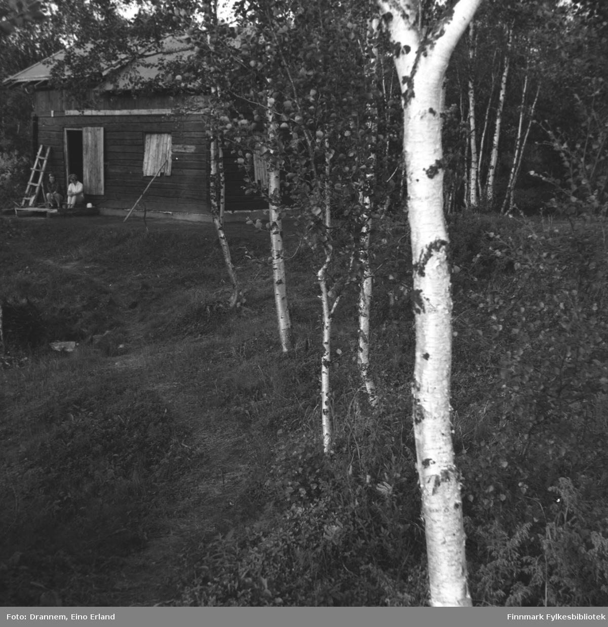 En hytte i skogen i Neiden-området.