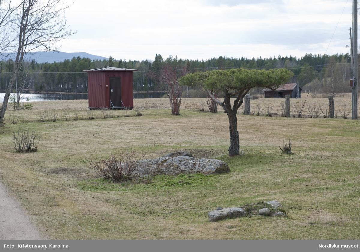 Rosa Taikons trädgård i Flor i Hälsningland