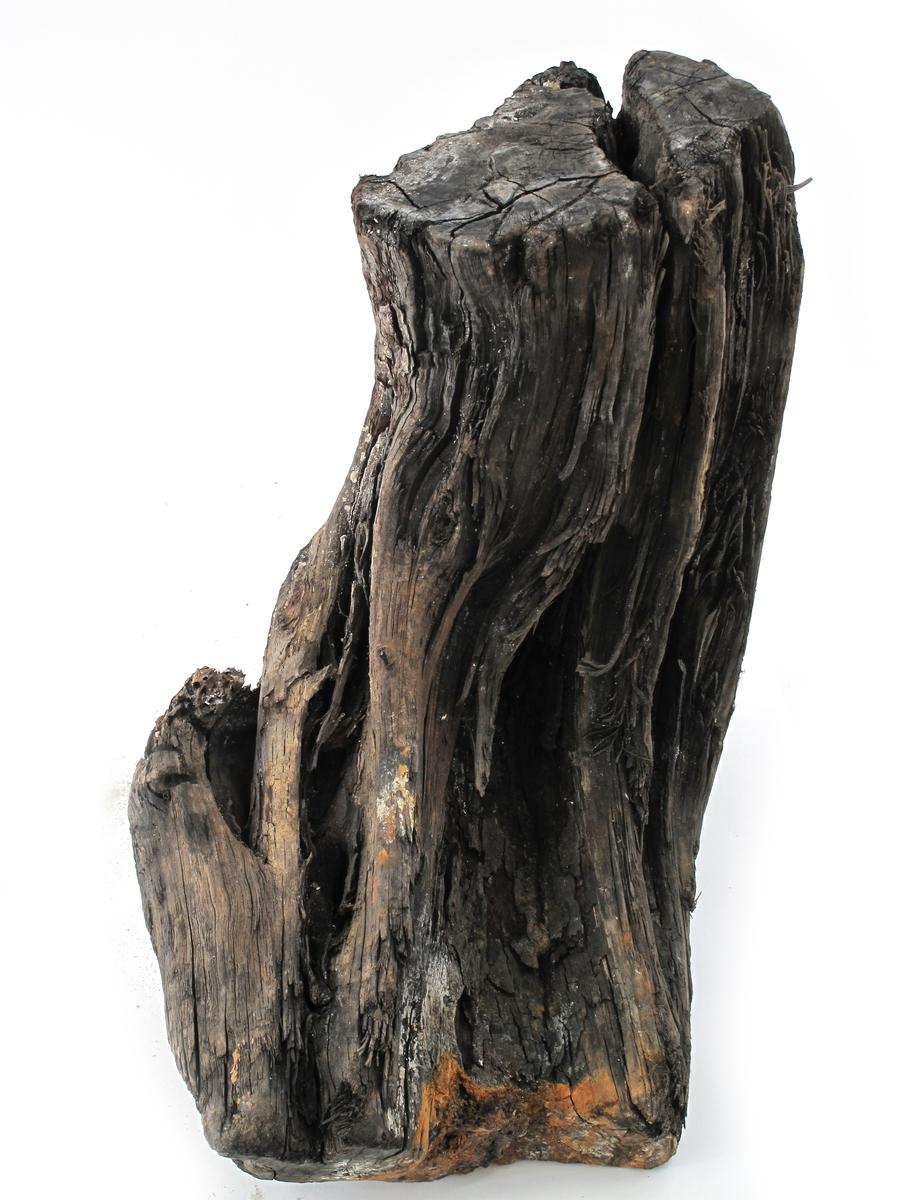 Fargetre, campuchetre, logwood.  k) Rotkubbe, stor og tung, en bredside er angrepet av pælemark og jevnet ut,  merket FRED 353