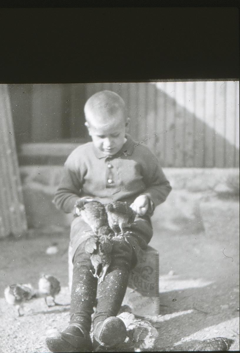 Gutt med høner på fanget på friluftsskolen Vangen.
