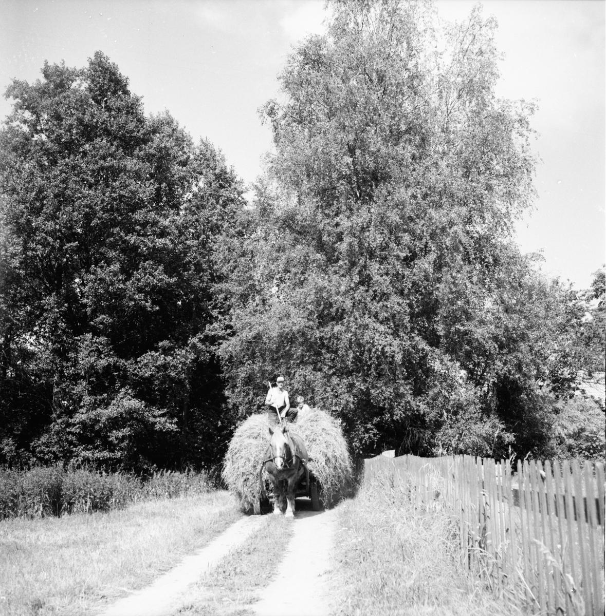 G. Eliasson simskola Skog, Stråtjära 22/8 1959