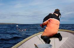 Sjølaksefisker Øystein Løfgren trekker sjølaks opp av havet