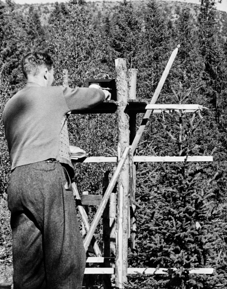 Forsøksleder, seinere professor, Elias Mork (1897-1974) registrerer forholdet mellom temperaturen og veksten i toppskuddet på ei gran ved hjelp av en ombygd termograf han hadde plassert på et stativ han hadde bygd omkring den lille grana.  Forsøkene ble gjort i nærheten av Skjerdingfjell på Hirkjølen i Stor-Elvdal kommune i Hedmark, der Det norske Skogforsøksvesen hadde etablert et forsøksområde i 1931, fem år før dette fotografiet.  Nettopp Elias Mork ble hovedaktøren i det arbeidet Skogforsøksvesenet gjorde på Hirkjølen.  Hans undersøkelser ble sentrale referanser for norske skogforskeres oppfatninger om fjellskogen.  Forsøksområdet var på hele 15 000 dekar i høydelag mellom 720 og 1 055 meter over havet.  Om lag en tredel av arealet var å betrakte som snaufjell.  Den undersøkelsen Mork arbeidet med da dette fotografiet ble tatt dreide seg om å klarlegge sammenhengen mellom temperatur og vekst hos gran.  Det fantes allerede mange undersøkelser som indikerte at sommertemperaturen hadde betydelig betydning for årringbreddene, og dermed for trærnes volumtilvekst.  Mork ønsket å studere veksten, ikke bare sesong for sesong, men også fra dag til dag.  Han innså at dette vanskelig kunne gjøres ved målinger av stammediametere dag for dag, både fordi denne diameteren vil variere med stammenes vanninnhold, fordi grantrærne har skjellbark som endrer form og struktur med temperatur og luftfuktighet og fordi at diametertilveksten fra dag til dag er så liten at det uansett ville vært vanskelig å måle endringer fra dag til dag.  Mork konsentrerte seg derfor om nøyaktige målinger av toppskuddene, som praktiske skogbrukere lenge hadde brukt mer skjønnsmessig som indikator på vekstforholdene i skogen.  Gjennom nøyaktige målinger av toppskuddenes vekstutvikling tok Mork sikte på å klarlegge veksttidas lengde, etter hvert på flere lokaliteter rundt omkring i landet.  Han mente at høydetilveksten i toppskuddet gjenspeilte trærnes evne til å assimilere karbondioksid, som igjen var avh