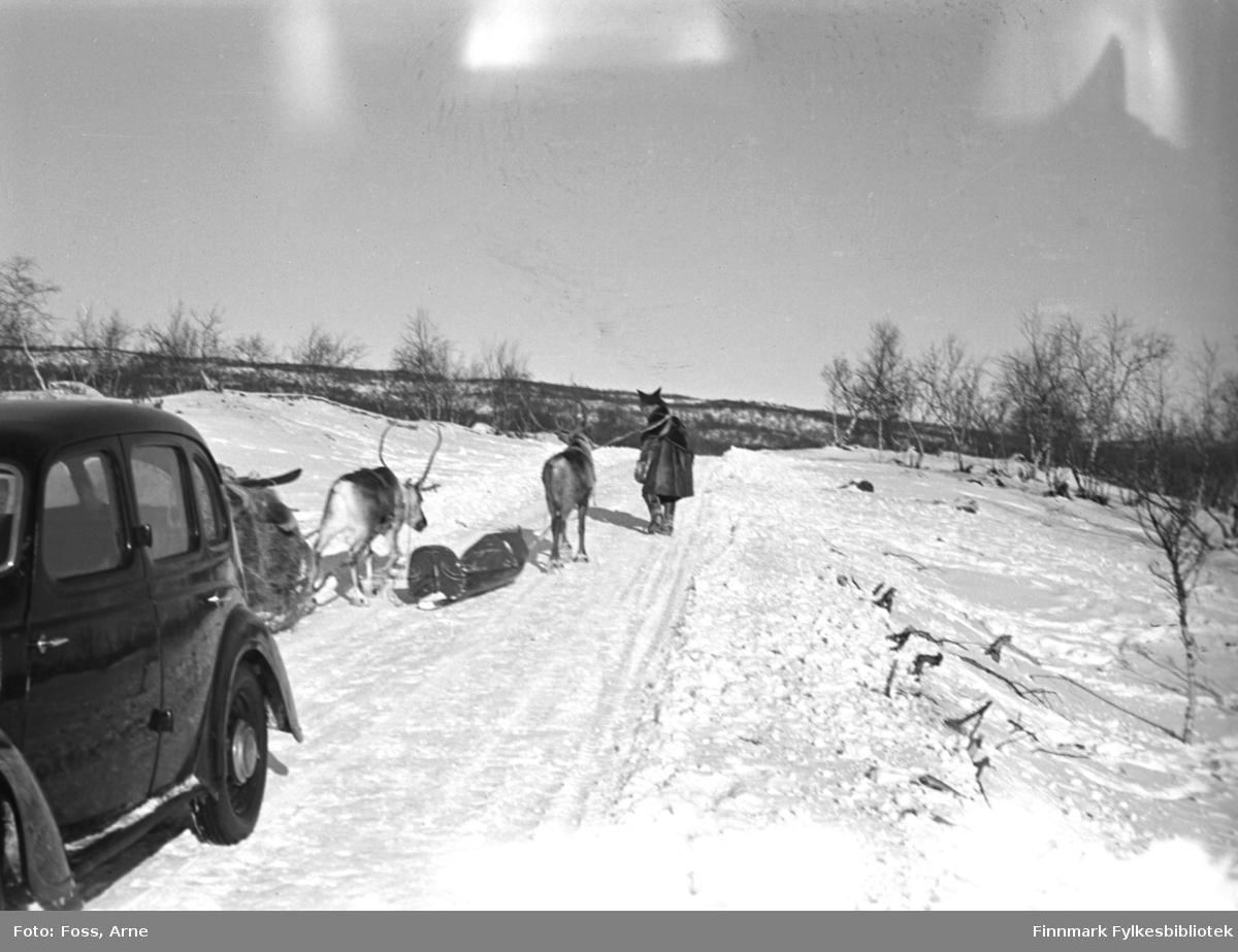 En reinraide fotografert antakelig i Skiippagurra eller i Polmak, i februar-mars 1947.