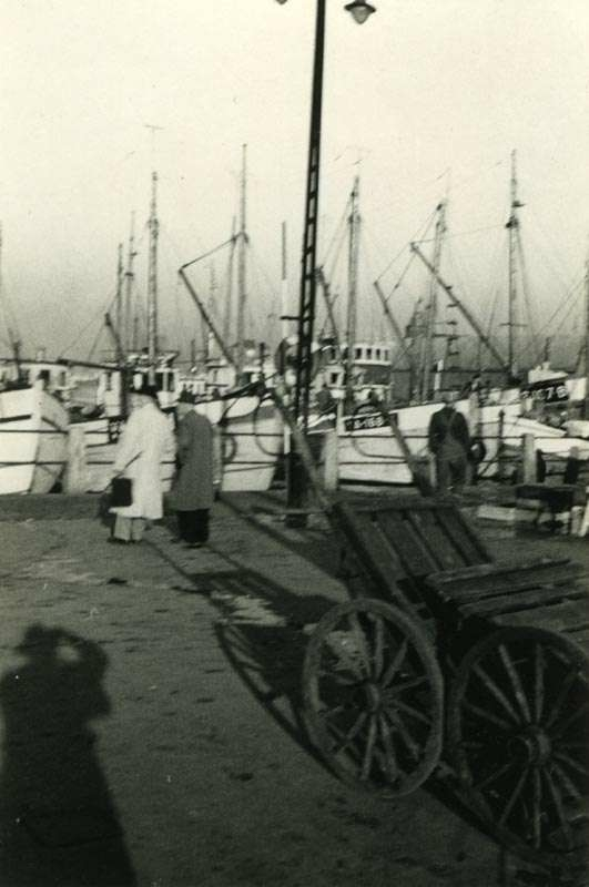 Fiskeskøyter i havn