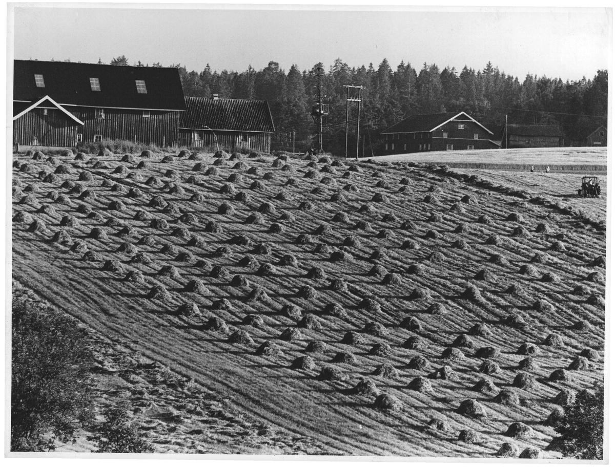 Slåttonn. Et sted i Østfold. Øverst s. 200. 51 %. (26 cic br.)