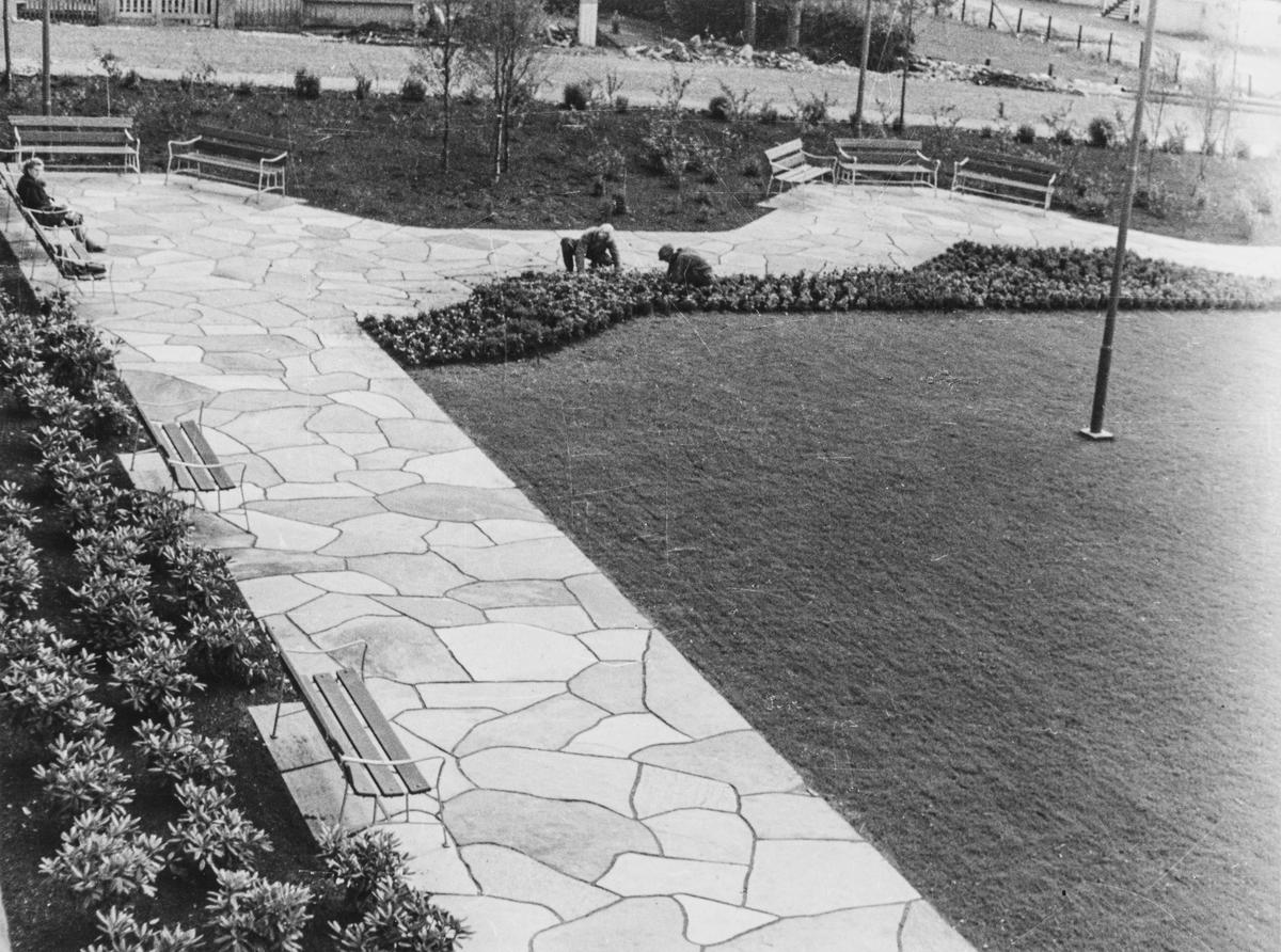 Sydsiden av Rådhusparken sett mot sydvest, 1949.