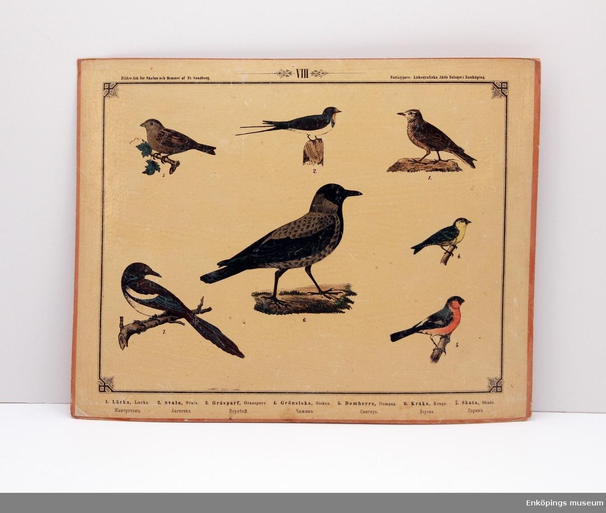 Skolplansch som visar olika fågelarter. Från Litografiska Aktie Bolaget i Norrköping.  Skolplanscher användes i de flesta skolämnen under 1900-talet. År 1900 kom en ny läroplan (normalplan) där lektionerna skulle åskådliggöras för eleverna för att de skulle förstå bättre. Detta gjorde att räknestavar, skolplanscher, stora kartor och den svarta tavlan blev viktiga skolredskap.