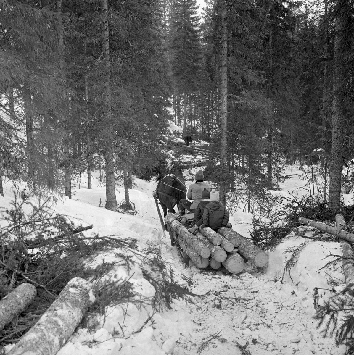 Tømmerkjøring med rede hos Per O. Løberg og sønn. Kjøringen foregikk i nærheten av Nybergsund, Trysil, Hedmark.