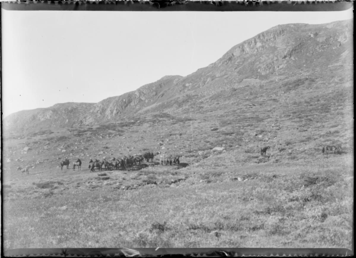 Hester oppe på et fjell.