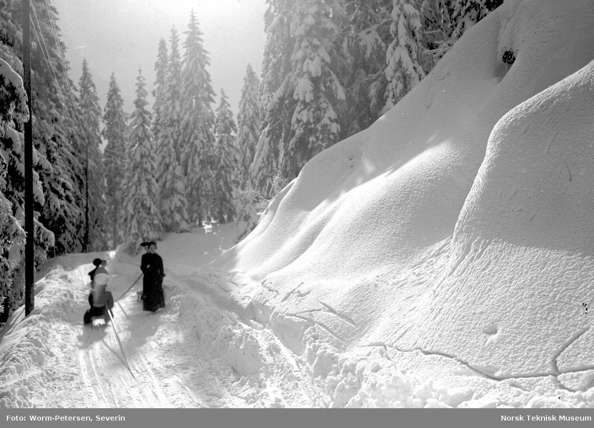 Vinterbilde, kjelke i skogen