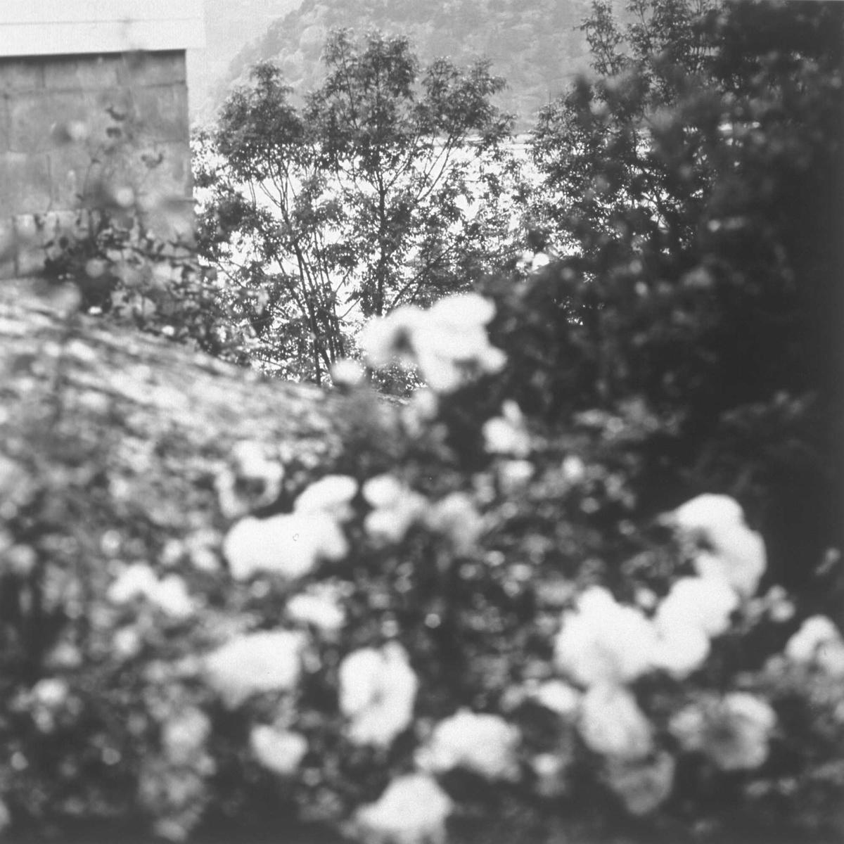 Kunstneren har latt seg fascinere av naturens ørsmå nyanser, som lys- og skyggevirkninger i løvtreets blader. Det hele er gjengitt med forankring i det klassiske svart/hvitt fotografiets tradisjon.